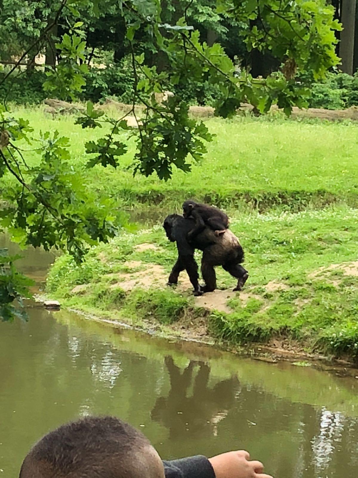 Accompagner Mimi en sortie scolaire au Zoo du Bois d'Attilly